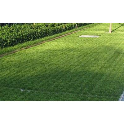成都 植草地坪